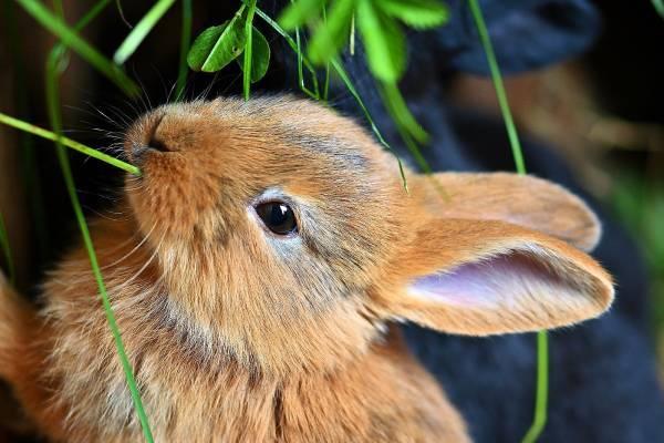 Male životinje kao kućni ljubimci: Prednosti i nedostaci