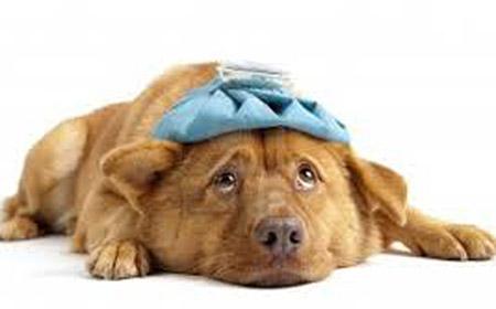 Kako prepoznati da je vaš pas bolestan?