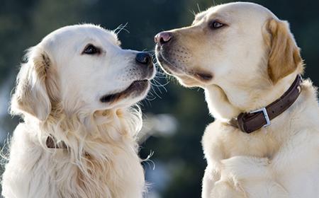 Šta treba da znate pre parenja pasa