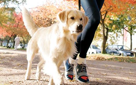 Kako da trenirate sa psom