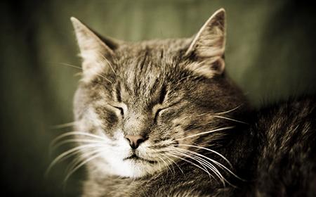Kako brinuti o starijim mačkama