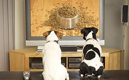 Da li psi gledaju televiziju?