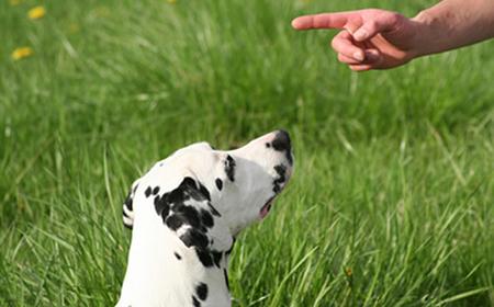 Dresura psa: Važan je ton kojim mu se obraćate!