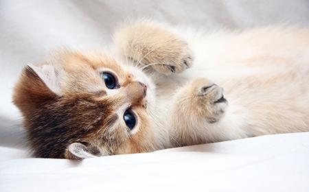 Zašto mačka neće da se druži sa mnom?