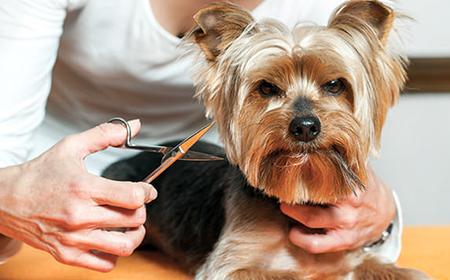 Da li pse leti treba šišati?