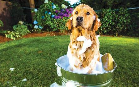 Kako da najlakše okupate psa?