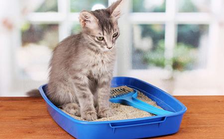 Kako da naučite mačku da koristi posudu sa peskom