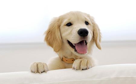 Koliko vaš pas stvarno ima godina?