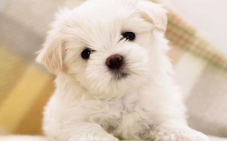 Rase pasa koje se ne linjaju