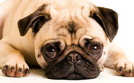 Kako da znate da je vaš pas u depresiji?