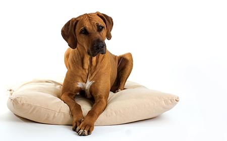 """Da li i vaš pas """"naskače"""" na stvari?"""