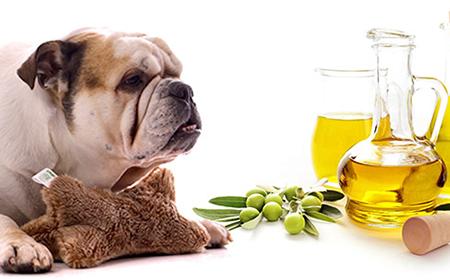 Kako maslinovo ulje pomaže vašem psu?