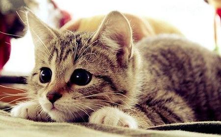 Kad mačka prede to pomaže našem zdravlju
