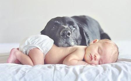 Pripremite psa za dolazak bebe
