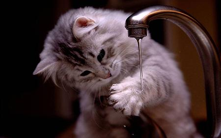Zašto mačke ne vole vodu?