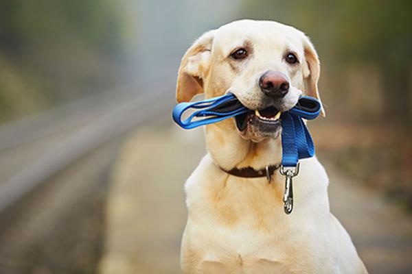 Zaštitite svog psa od opekotina na šapama
