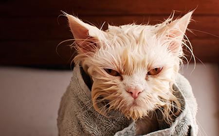 Mačke i kupanje