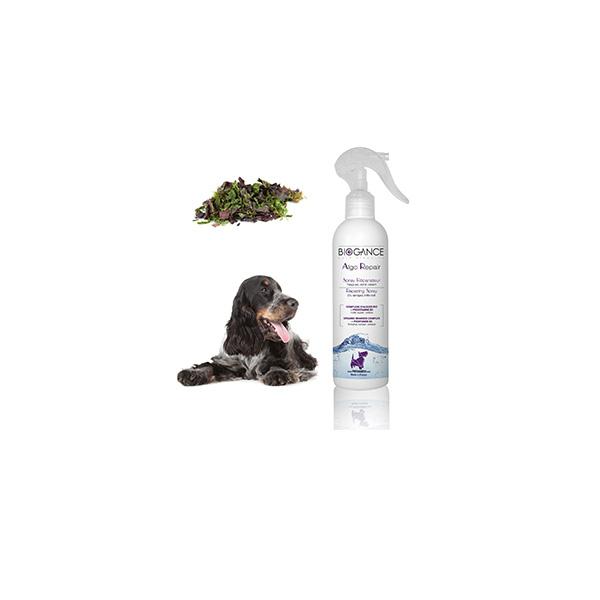 Bigance Algo Repair daily spray sprej za regeneraciju dlake pasa